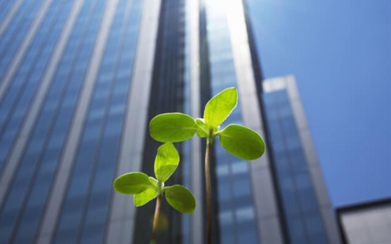 5 práticas para tornar sua empresa mais sustentável